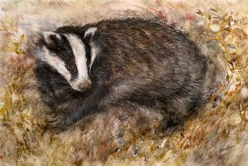 Badger's Rest by Gary Benfield £375