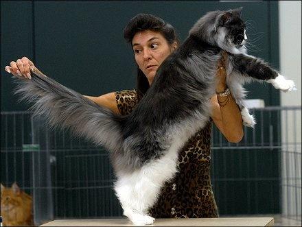 dr cat begovic