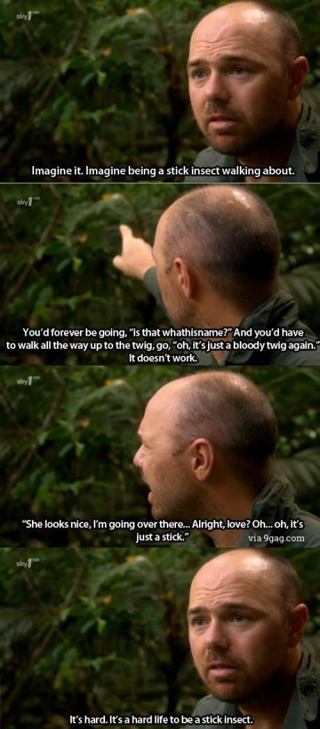 Imagine being a stick insect.