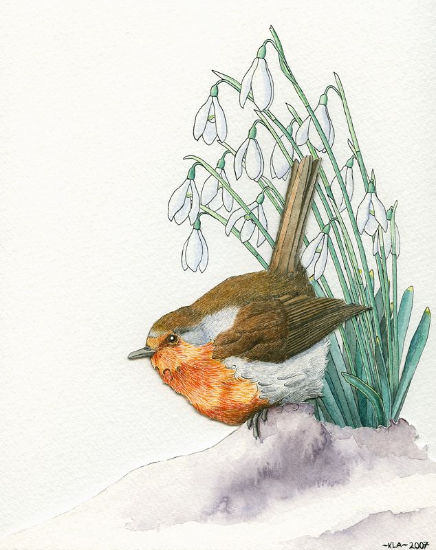 Portfolio - Kelly Archer Wildlife & Pet Portraits  #robin #snowdrops #illustration #painting #watercolor #watercolour #stilllife #portraits #petportraits