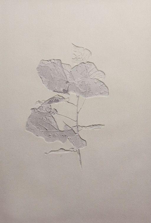 Populus Alba (Giovani foglie) 2013 carta pergamena bianca incisa a mano cm. 28,5 x 19