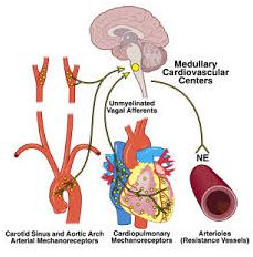 Natural Treatment For Neurocardiogenic Syncope