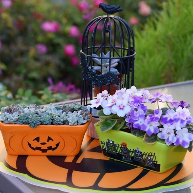 Found these super cute loaf pans and batty birdcage @michaelsstores last weekend and thought they would be a great way to incorporate my plants into my Halloween decor!! Love how they turned out! #madewithmichaels #mygarden #succulents #babysucculents #africanviolet #africanviolets #halloween #halloweenideas #halloween2016 #succulove #succulent #succulentaddict #succulentlove #picoftheday #festive #decorating #repurpose #gardening #plantsarefriends #saintpaulia #decor