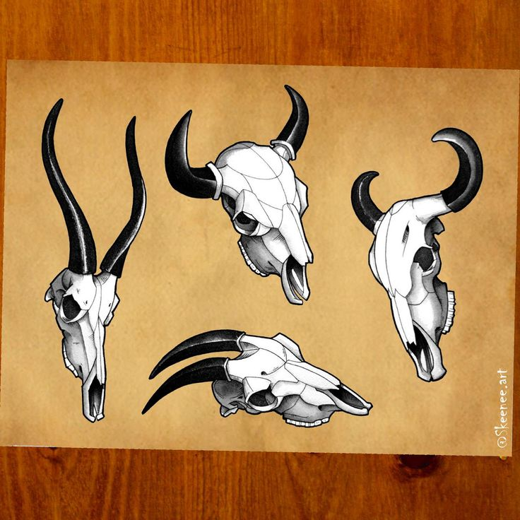 Tattoo Flashes: Skulls & Horns. Buffalo, antelope & goat skulls, done with fountain pen and Sumi ink.  Check my daily progress on Instagram@skeenee.art . Hope you like it!  #skeenee #skull #flash #tattooflash #buffalo #tattoo #ink #black #drawing #painting