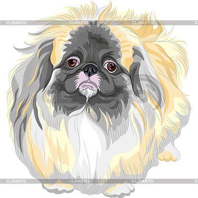 Породистая собака породы пекинес Sable | Векторный клипарт | ID 3558291