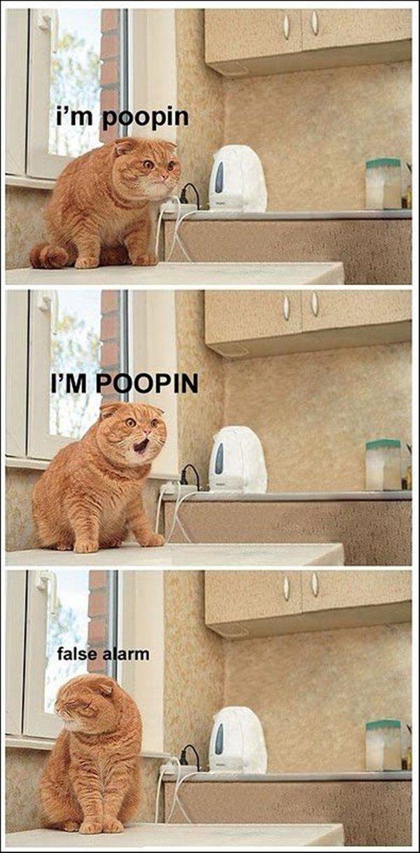 Amazing Creatures: 30 funny animal captions - part 3 (30 pics)