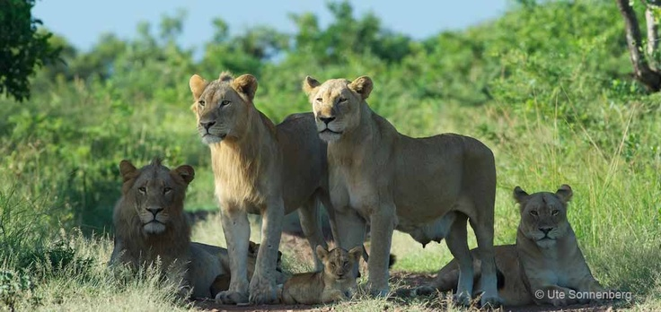Wildlife photography courses Kruger National Park, South Africa.