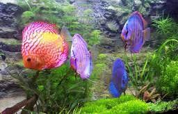 Image result for diferentes especies de peces en el mar