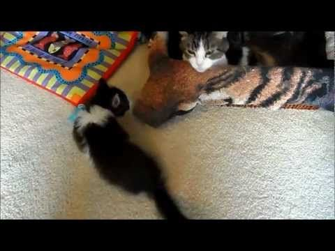 """Anakin is featured on Catster's article 5 Recipes for Deliciously Cute Cat Videos """"Secret Cute Cat Video Recipe No. 2"""", http://www.catster.com/molz/5-recipes-cute-cat-videos"""