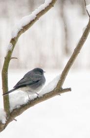 Resultado de imagen de pajarillo en la nieve
