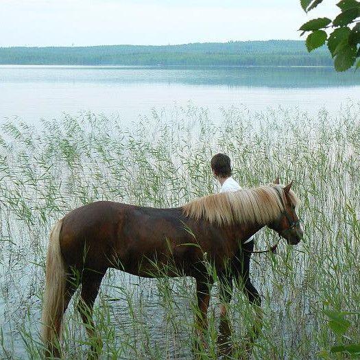 Mikäpä voisikaan olla mukavampi lahja koululaiselle tai opiskelijalle, jotka viettävät kesälomaansa, kuin tämä opastettu hevosvaellus Paltamon jylhissä maisemissa? Islanninhevoset ovat rauhallisia ja pienikokoisia hevosia, joilla ratsastaminen on helppoa, vaikka aiempaa kokemusta ei olisikaan. Tämä arvokas ja miellyttävä elämyslahja sopiikin niin yksittäiselle henkilölle, pariskunnalle kuin vaikkapa kokonaiselle ryhmällekin –syntymäpäiväksi, virkistyspäivän ajanvietteeksi…