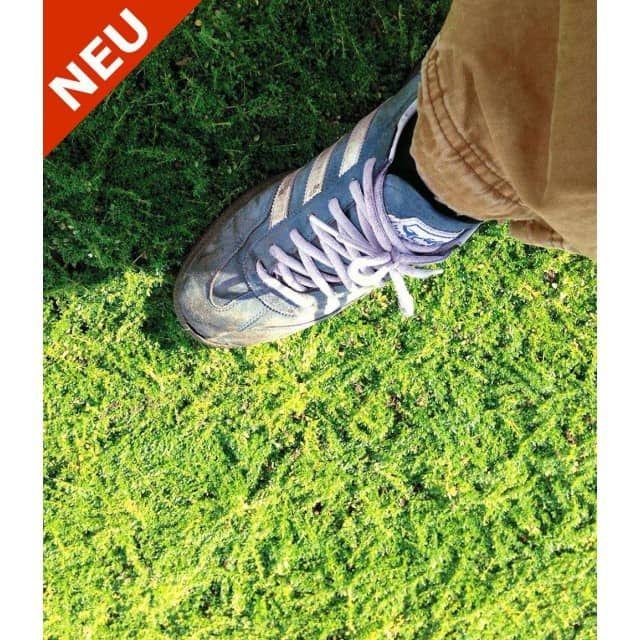 184 Best Garten - Samen & Pflanzen & Pilze & Knollen Images On