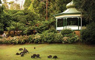 Cataract Gorge - Discover Tasmania