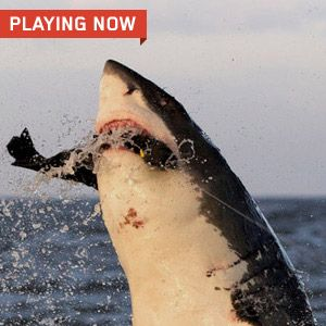 Take a ride with Mega Shark Cam!