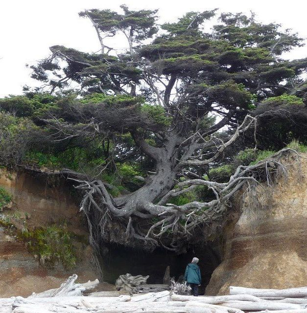 An otherworldly natural phenomenon, hidden on a secluded Washington beach.