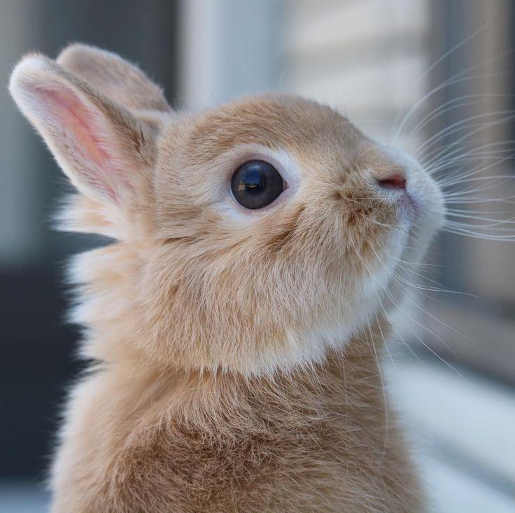 разглядывать картинки мимими животных фото