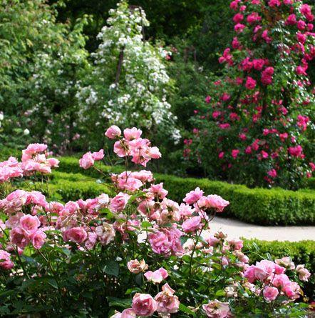 Rosaleda. Real Jardín Botanico de Madrid.  #jardinbotanico #Madrid