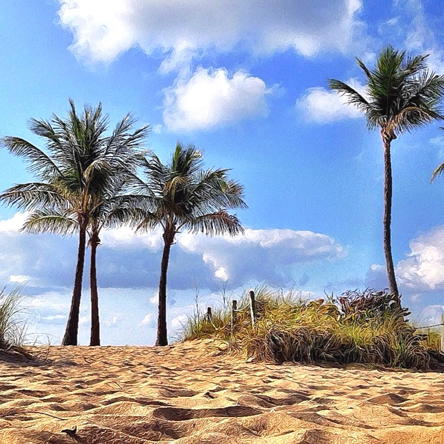 Dunes And Palm Trees In The Fort Lauderdale Sun