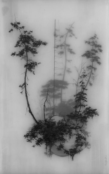 Brooks Shane Salzwedel - Held Up - 2008 Great reference art for the atmospheric trees I would like on my lower leg piece.