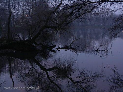 Tychy, Park Północny, zima, foto. Beata Wąsowska