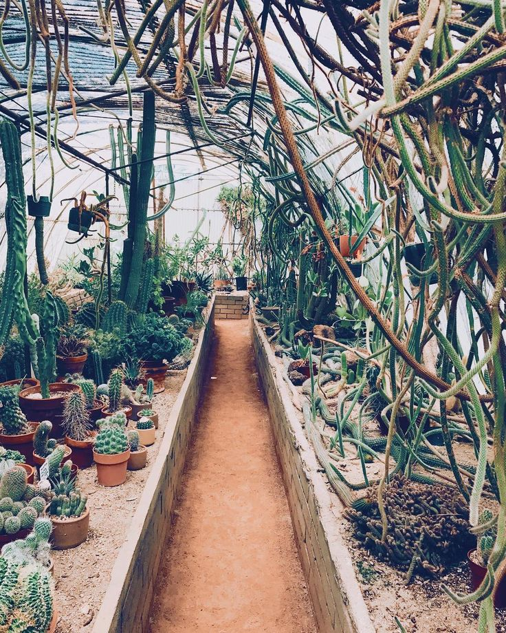 I want you to know that this is my EXACT home goals/inspiration for our house.  Terrell really is going to kill me one day or at least leave me to be the crazy plant lady who gets trapped in her own house jumanji style. (Ps let's talk about the new jumanji movie @sondraglad !!!!!!)