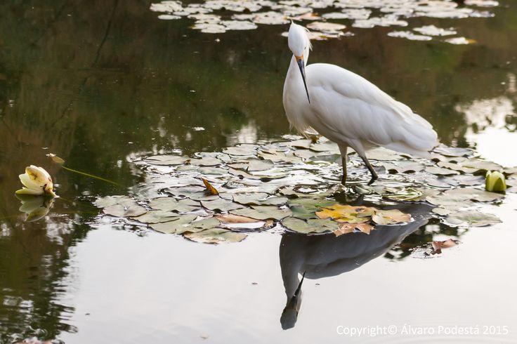 El reflejo de un ave elegante