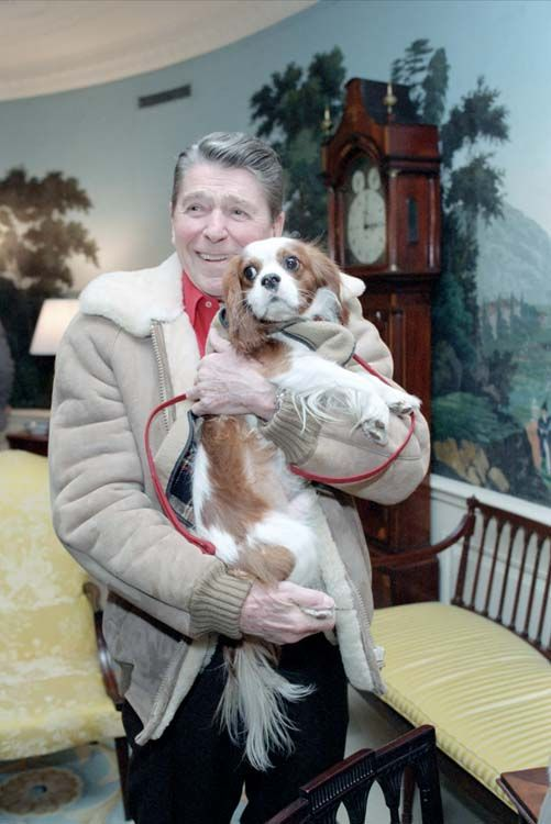 "A President's Best Friend  President Reagan holds his Caviler King Charles Spaniel ""Rex"" in the Diplomatic Reception Room on March 7, 1986. ..."