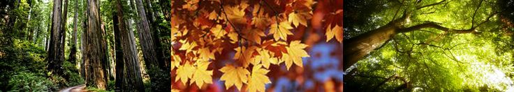 Care your #garden with #Treesurgeon Sydney : http://www.mediafire.com/view/bcn6kupjvbuoshi/Tree_surgeon_sydney_to_maintain_your_garden_beauty.pdf