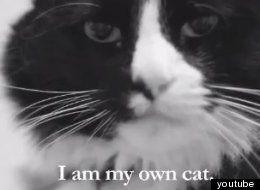 Je suis mon propre chat <3 Henri le chat noir