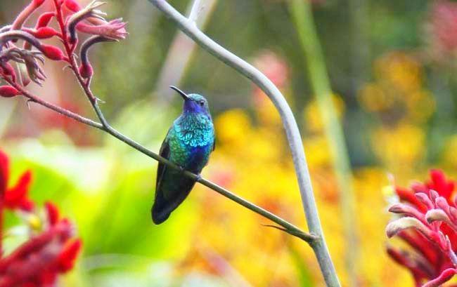 Colibrí #Bird #Natura #Ave