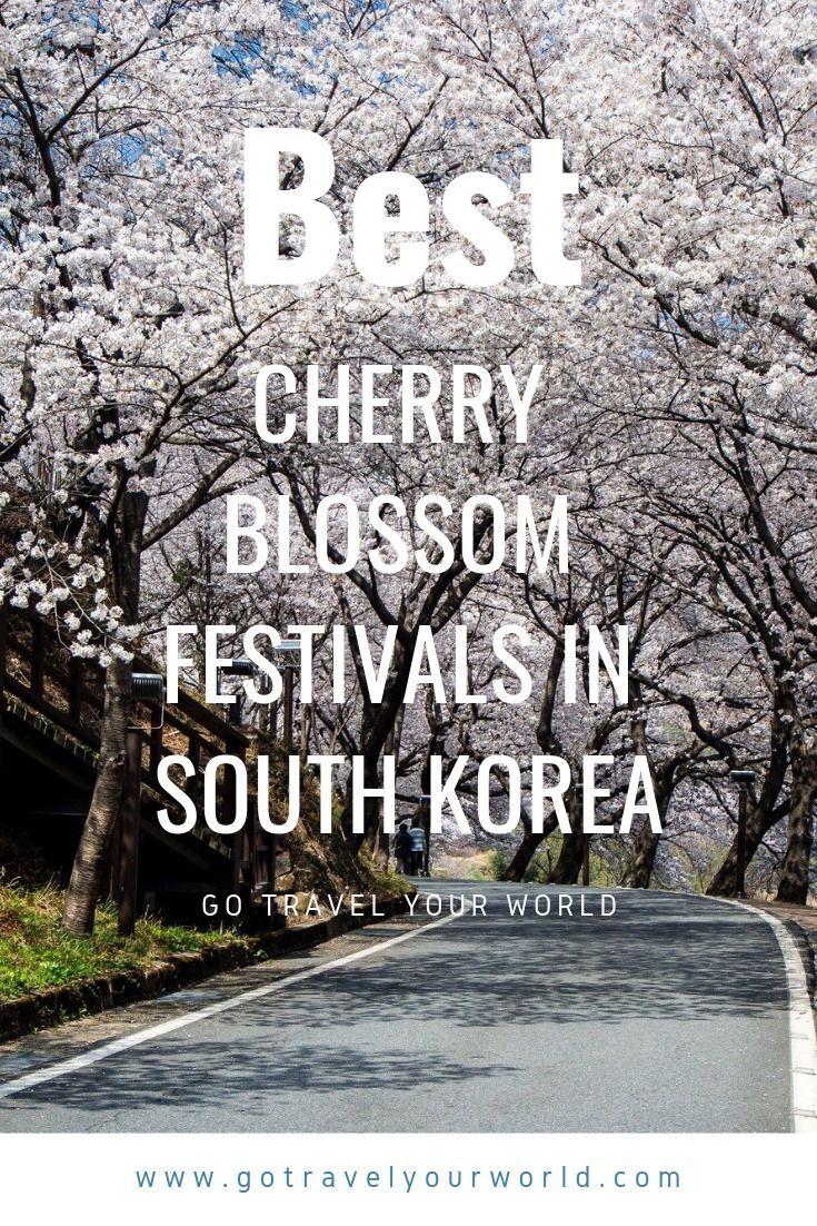Best Cherry Blossom Festivals South Korea Cherry Blossom Festival South Korea Cities In Korea