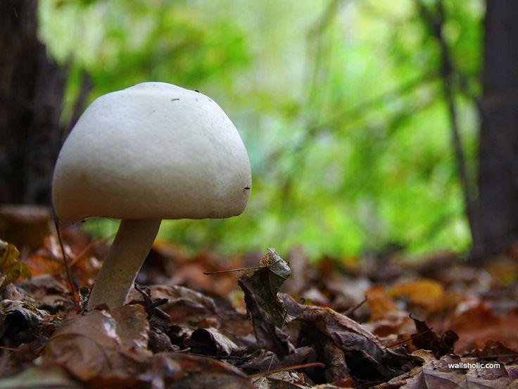 69 best prezi images on pinterest nature searching and fantasy mushroom toneelgroepblik Gallery