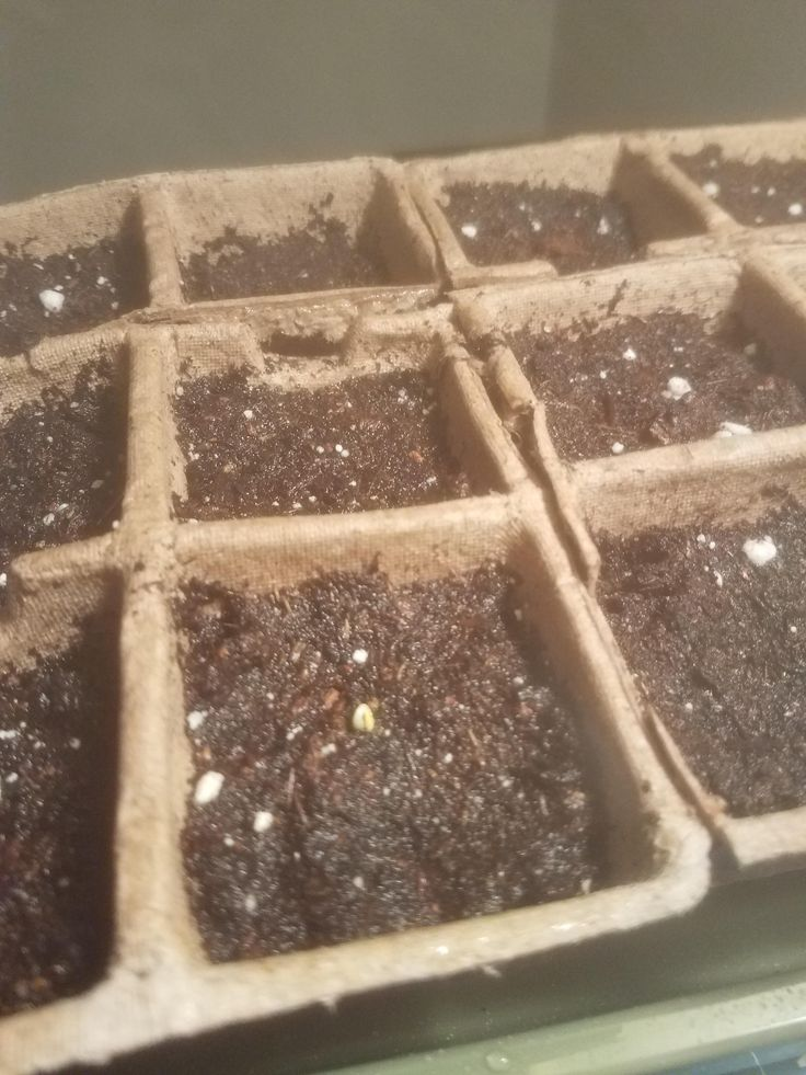 First time growing anything! Broccoli seed just popped out this morning! Yay! https://i.redd.it/kpwlpy5h9cj01.jpg
