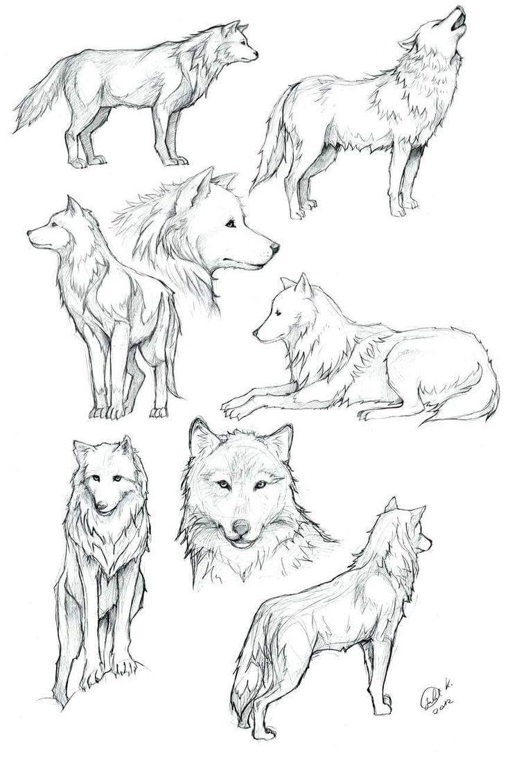 Wölfe von Siebenbürgen zeichnen