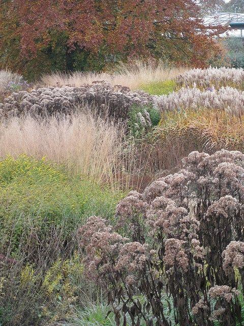 Piet Oudolf - Trentham Gardens