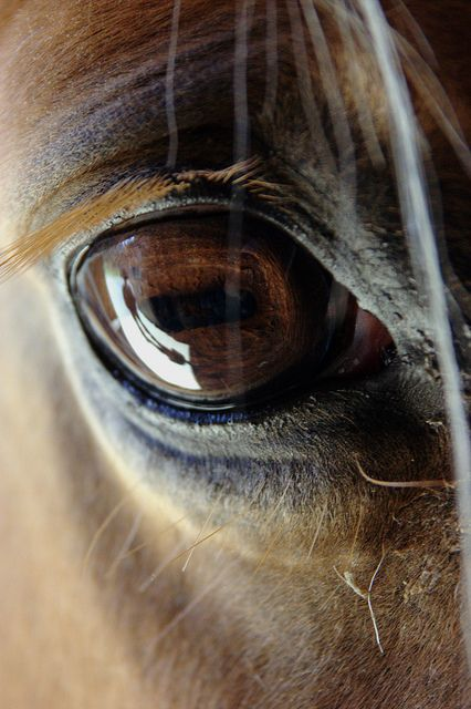 """A large and liquid eye...the swirl of dust around pounding hooves...these, then, are the images that move us."" ~Unknown"