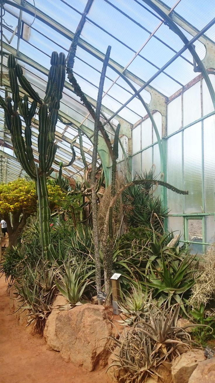 52 best caldarium images on Pinterest | Botanical gardens, Berlin ...