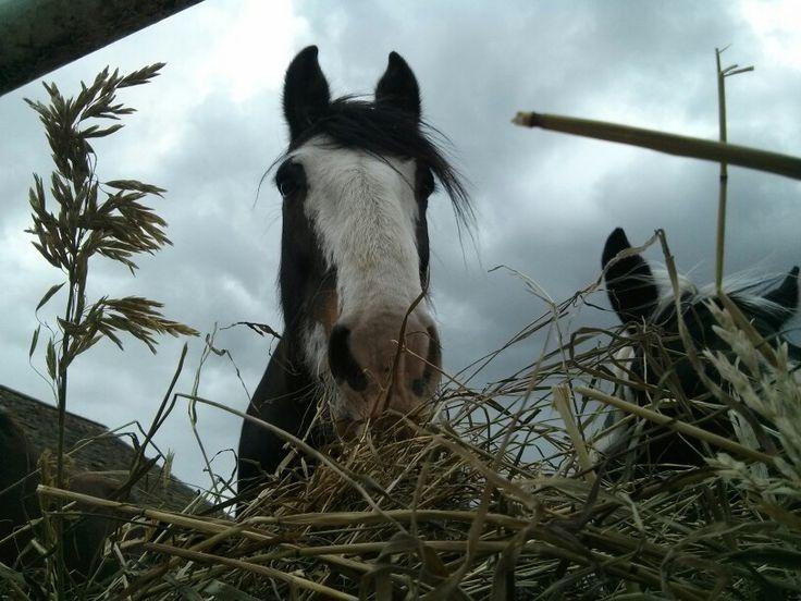My mare, Diva.:-)