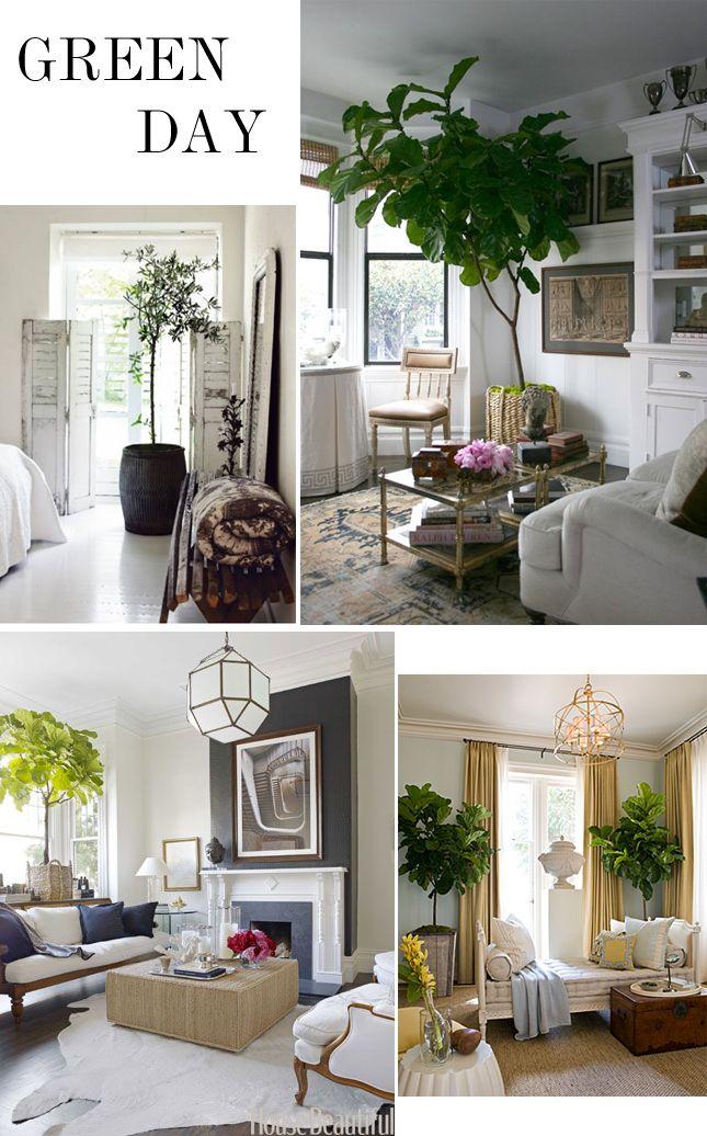 Best 25+ Indoor trees ideas on Pinterest | Indoor tree plants, Fig ...