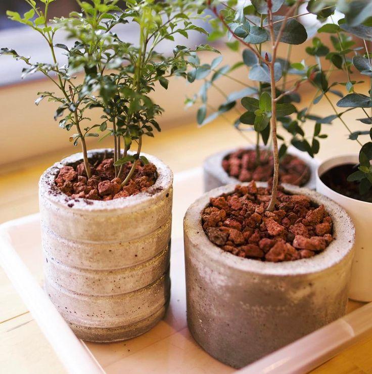 苦労して作ったセメントポット醤油とか味噌の容器を型にしてます #観葉植物 #diy