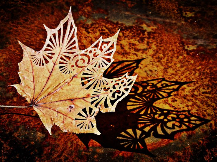 #leaf #fall #ElementEdenArtSearch My carved leaf. I was just trying to do the leaves look like delicate lace.