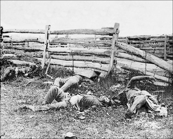 Civil War Dead at Battle of Antietam Photo Print