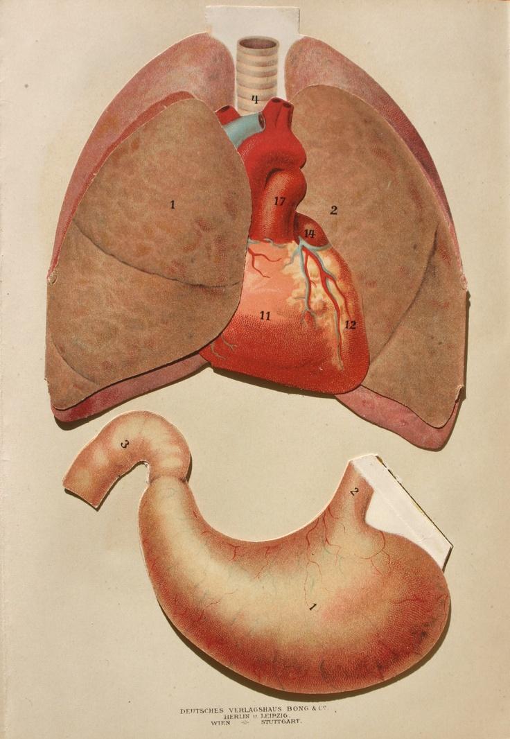 92 besten vintage anatomy Bilder auf Pinterest | Menschliche ...