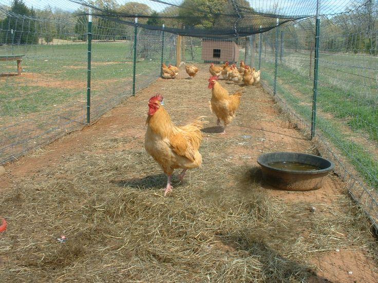 Long chicken run chicken coop ideas pinterest the for Chicken run for 6 chickens
