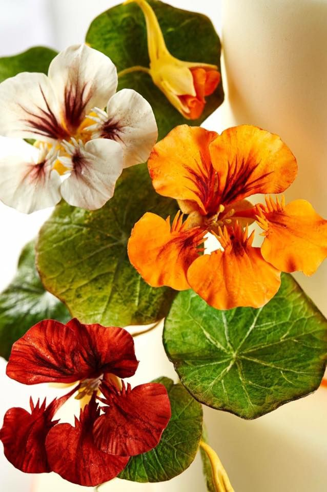 {I adore this trio of perfect Nasturtiums by Alan Dunn}