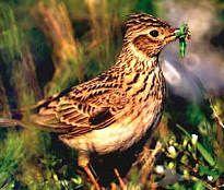 Bruits et chants oiseaux