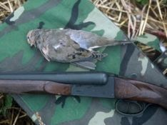 More Dove Hunting Tips