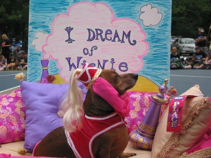I dream of Wienie!: Doxie Stuff, Weenie Dogs, Dreams, Dachshund, Weenie Genie, Pet, I'M, Halloween Ideas, Moxi Doxies
