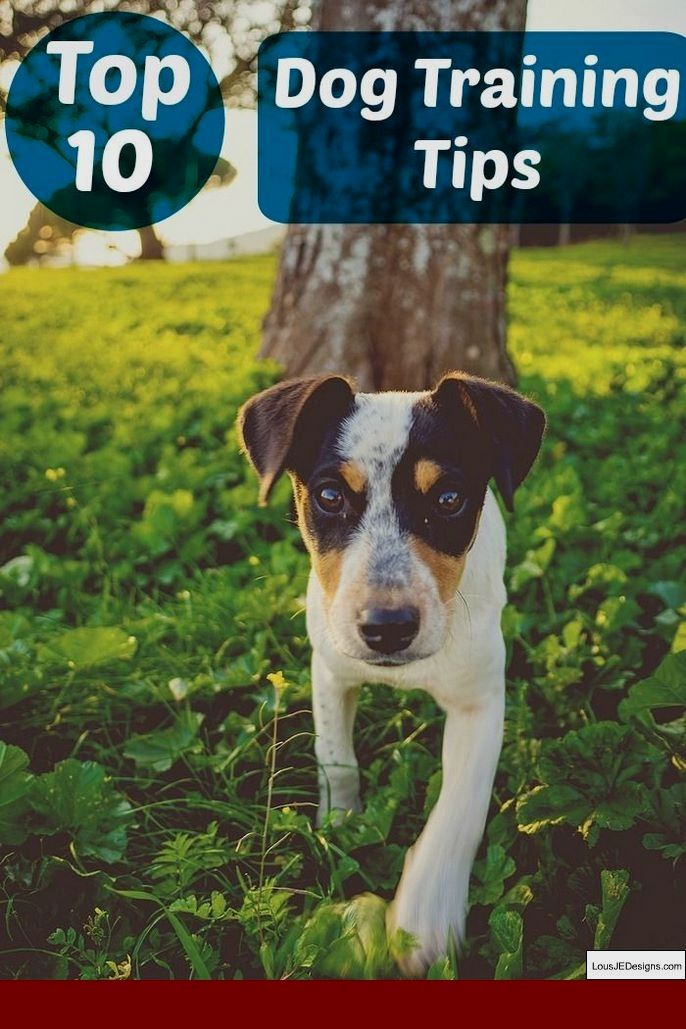 Dog Training Tips For Puppies And Pics Of How To Train Your Dog To