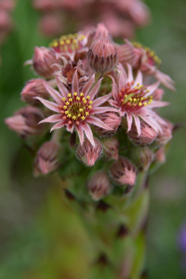 300 besten pflanzen wildblumen bilder auf pinterest. Black Bedroom Furniture Sets. Home Design Ideas